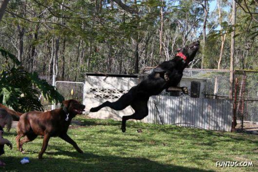 Amazing Dogs Flying High